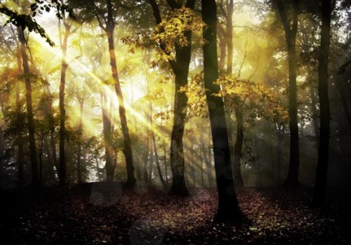 Using HDR Toning to Create a Fantasy Forest Scene
