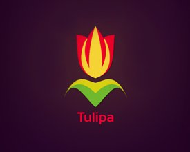 Tulipa