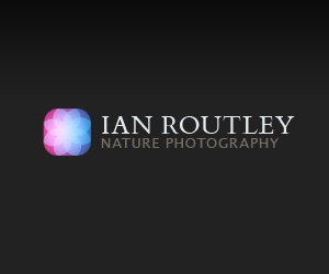 Ian Routley Nature Photography
