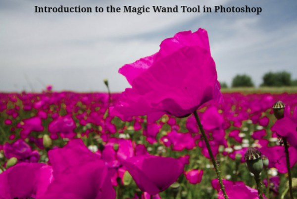 Introduction to the Magic Wand Tool in Photoshop