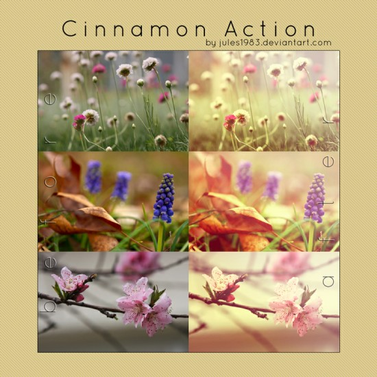 Cinnamon Action