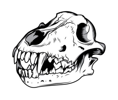 Mouse Skull Drawing Wolf Skull in Illustrator